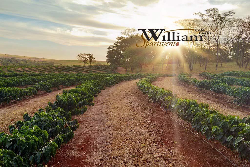 William Spartivento - Une histoire de passion et d'innovation 2